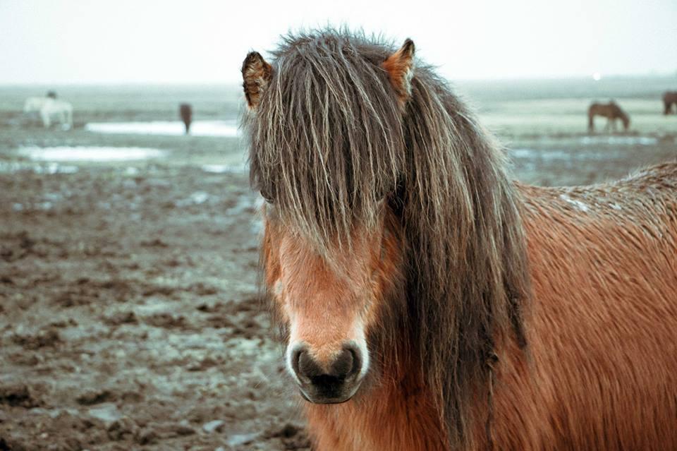 Heu - der Wärmetreibstoff für ihr Pferd