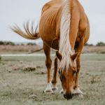 Mein Pferd ist zu dünn - was tun?