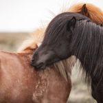 Fellwechsel beim Pferd - ein haariger Kraftakt