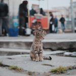 Weltkatzentag 8. August 2018 - machen sie mit!