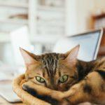 Huf und Pfote-Newsletter - immer gut informiert