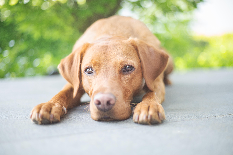 Effektive Mikroorganismen & Hunde