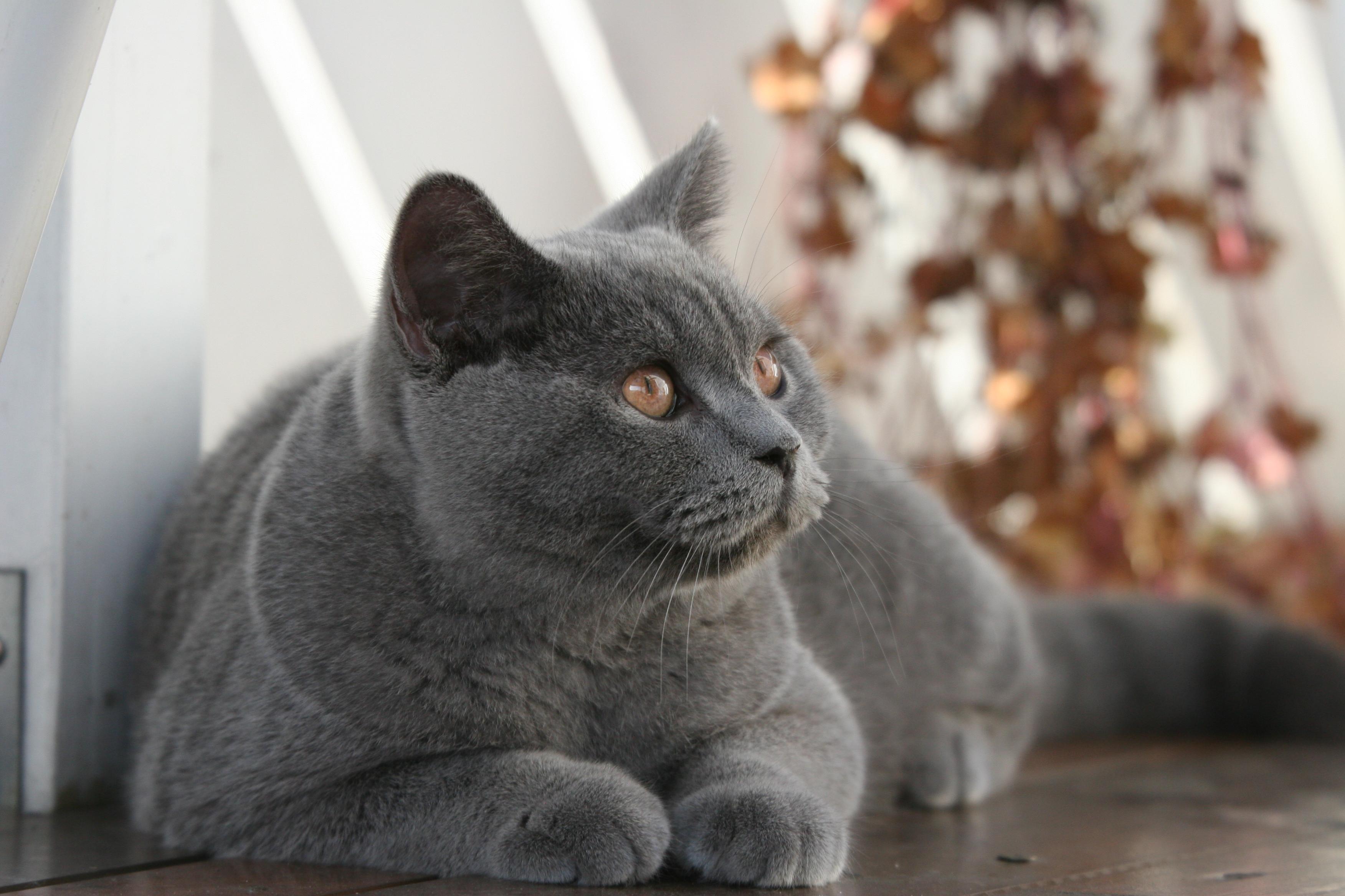 Effektive Mikroorganismen & Katzen