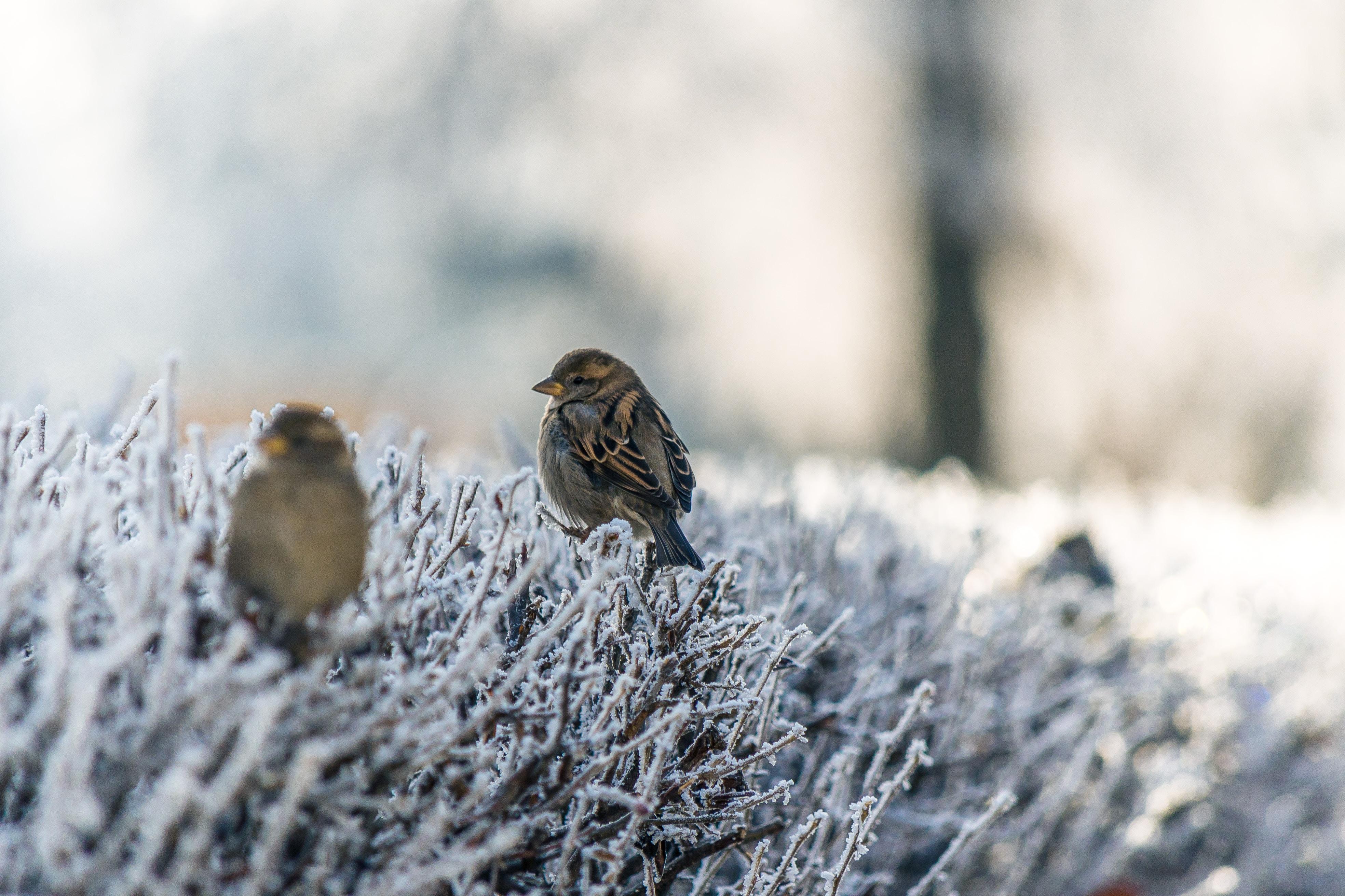 Wildvögel ganzjährig unterstützen