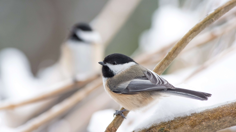 Wildvögel im Winter unterstützen