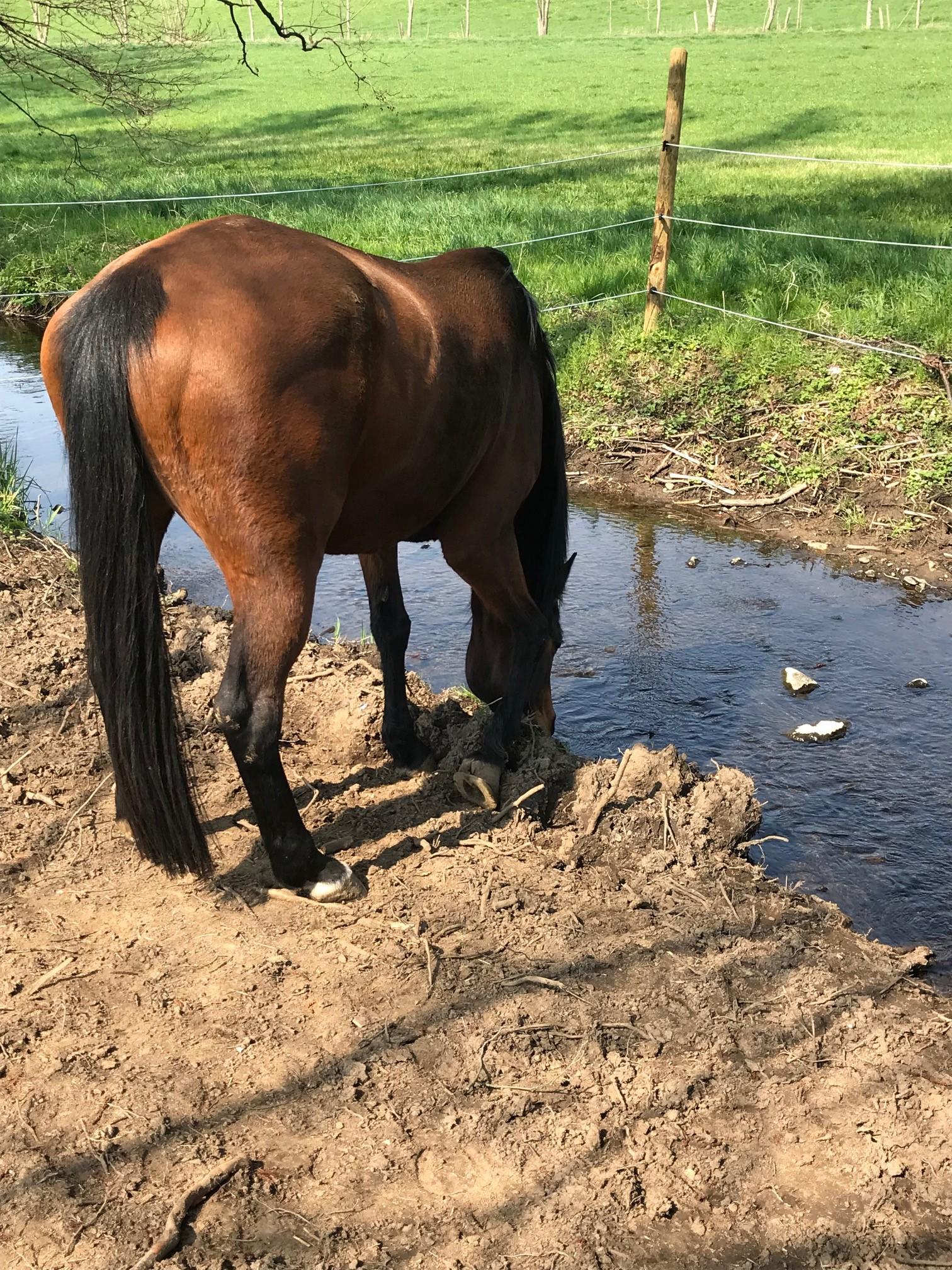 Wasser - das Lebenselixier