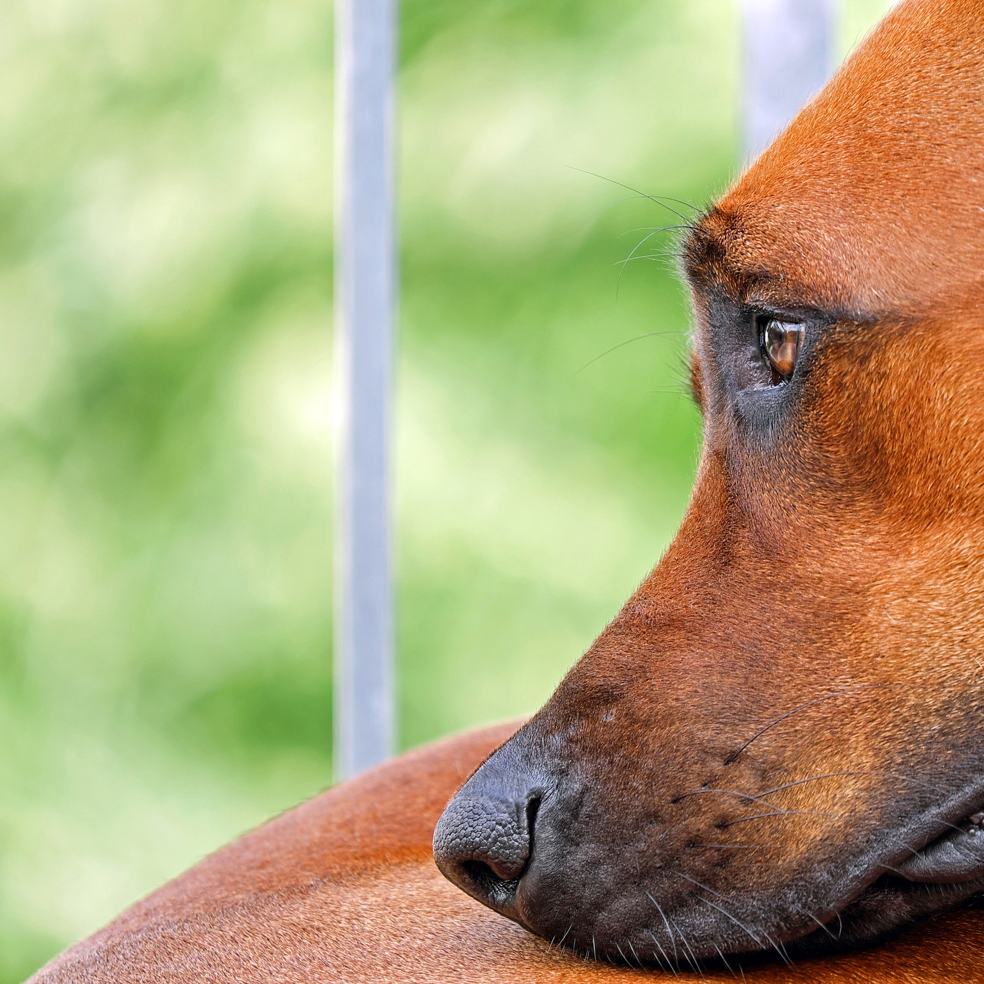 TASSO hilft, wenn Ihr Tier verloren geht