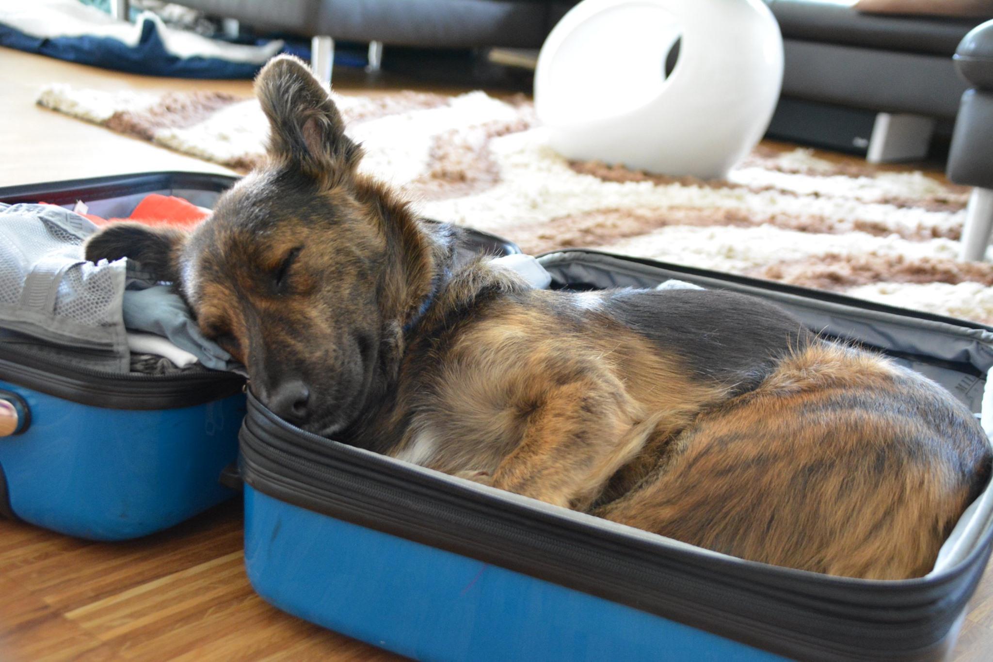 Bernie hat schon seinen Koffer gepackt