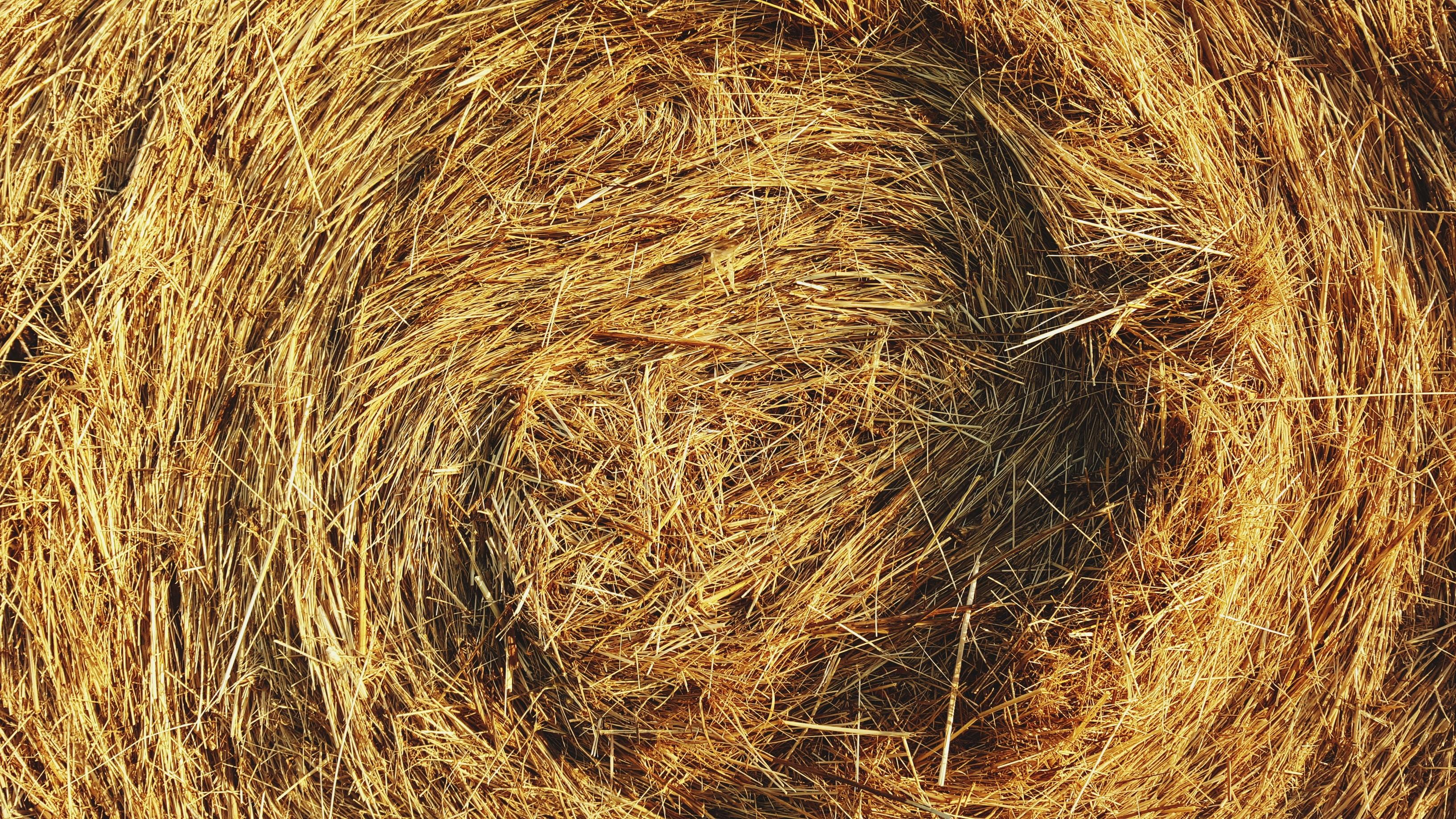 Heu - das Grundfuttermittel für Pferde