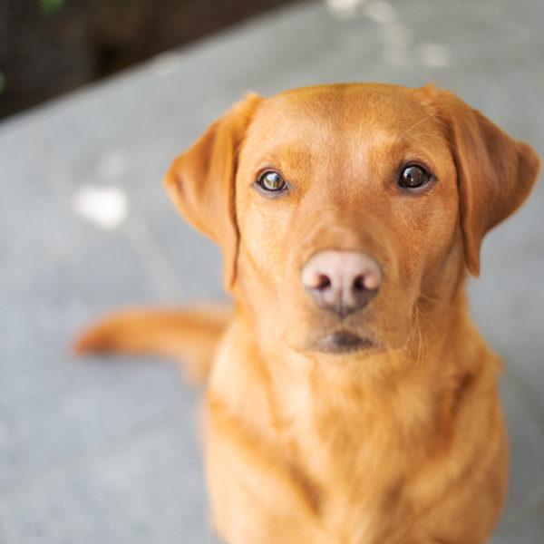 Gesundheitstest für Hund, Katze, Pferd (Frequenzanalyse)