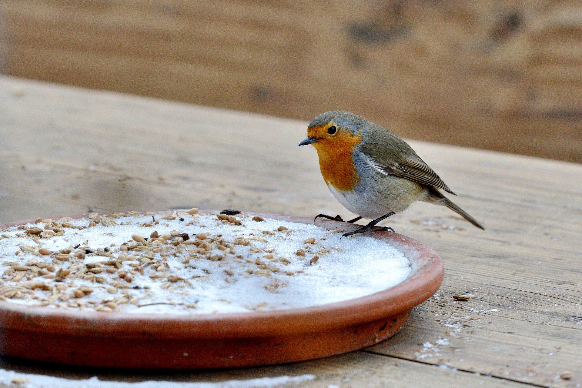 EM-Fettfutter für Wildvögel selbst gemacht