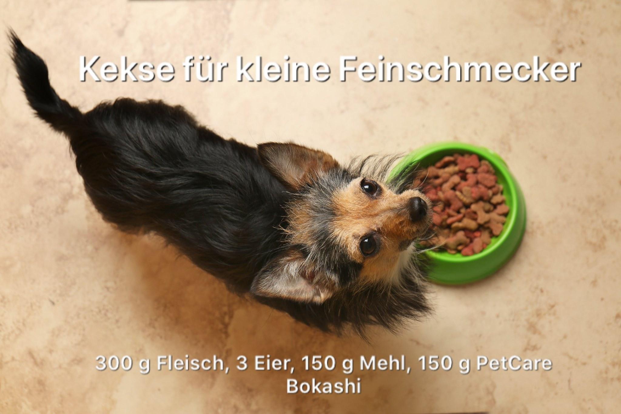 Hundekekse für kleine Feinschmecker