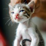 Wissen Sie schon, dass ... man Katzen niemals am Nacken packen sollte?