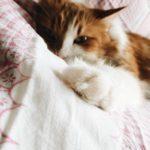Weißt sie schon, dass ... Katzenschnurren Knochen heilen kann?