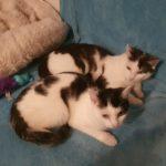Felix & Mausi suchen ihr Für-immer-Zuhause