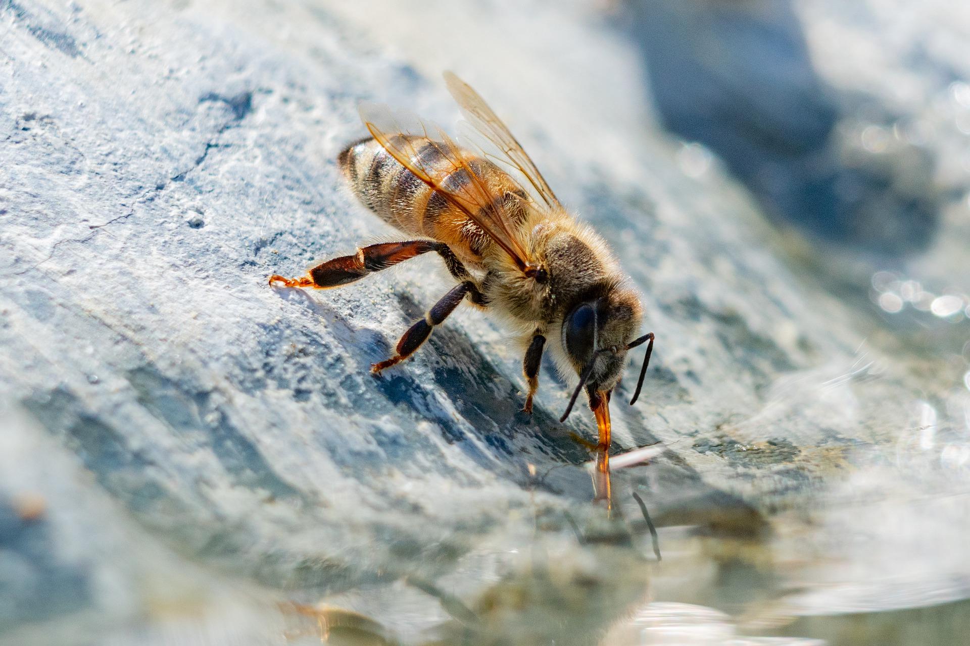 EM-Apis-Bienen- und Insektentränke